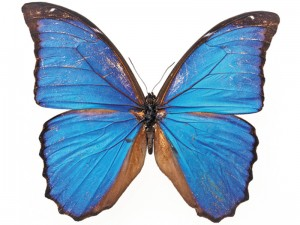 Тематическое занятие Бабочки от Марии!!!