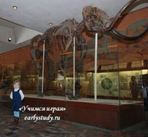 поход в палеонтологический музей