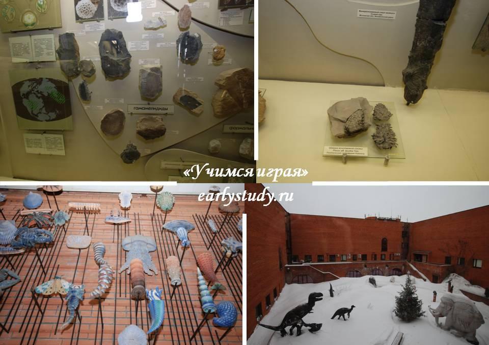 рассматриваем окаменелости и экспонаты
