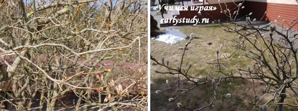 весна у деревьев