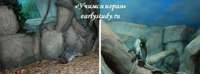 животные в океанариуме