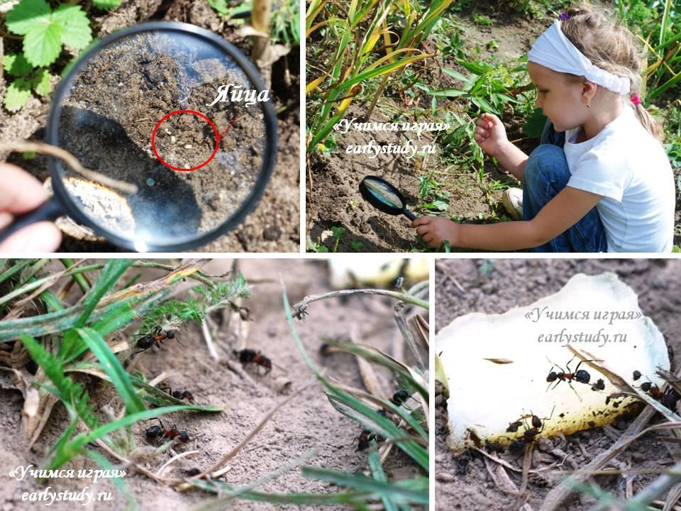 Изучение муравьев