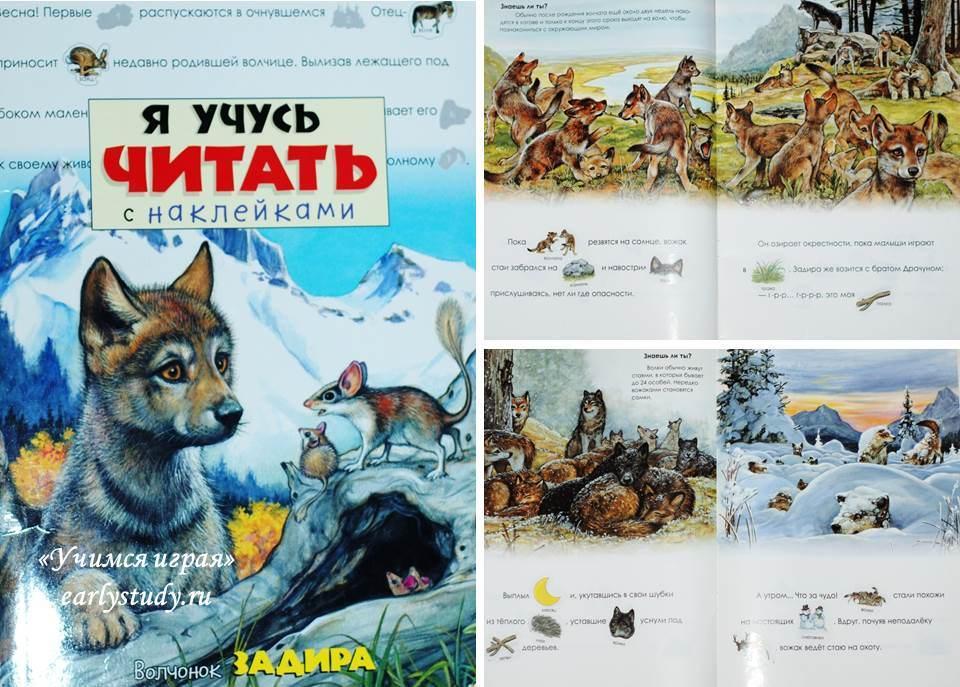 Сказки и энциклопедии о волках