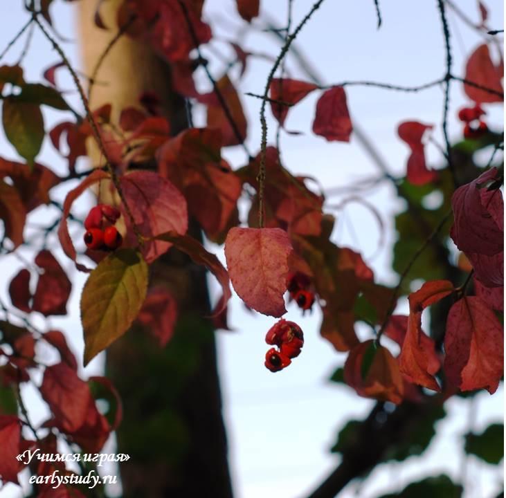 Уютная осень